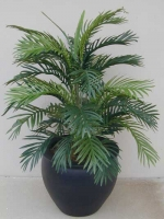 Areca Palm fishbowl