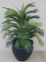 Areca Palm fishbowl
