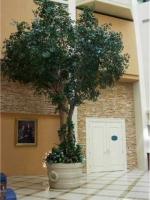 Camellia Leaf Tree
