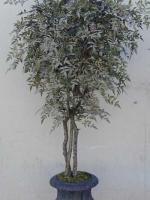 Nadina Tree