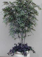 Smilax Tree