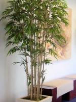 Bamboos 8ft