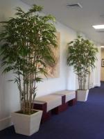 Bamboos hall