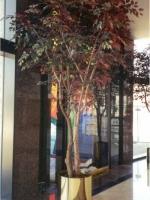 Capensia Tree