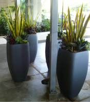 Here we used mixed succulents in tall Athena containers at the doorway of the VA North Hospital in Las Vegas. (Click image to enlarge)