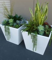 "Here are the succulents in fiberglass containers that feature on the show, ""A to Z"" pictured at our workshop prior to delivery. (Click to enlarge)"