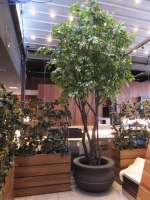 UV-15ft-Ficus-Tree-and-trellises2