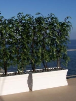 Make Be-leaves artificial Ficus trees outdoor