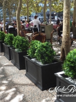 makebeleaves uv Boxwood headge plantings