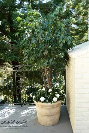 UV Gardenia and Ficus plant