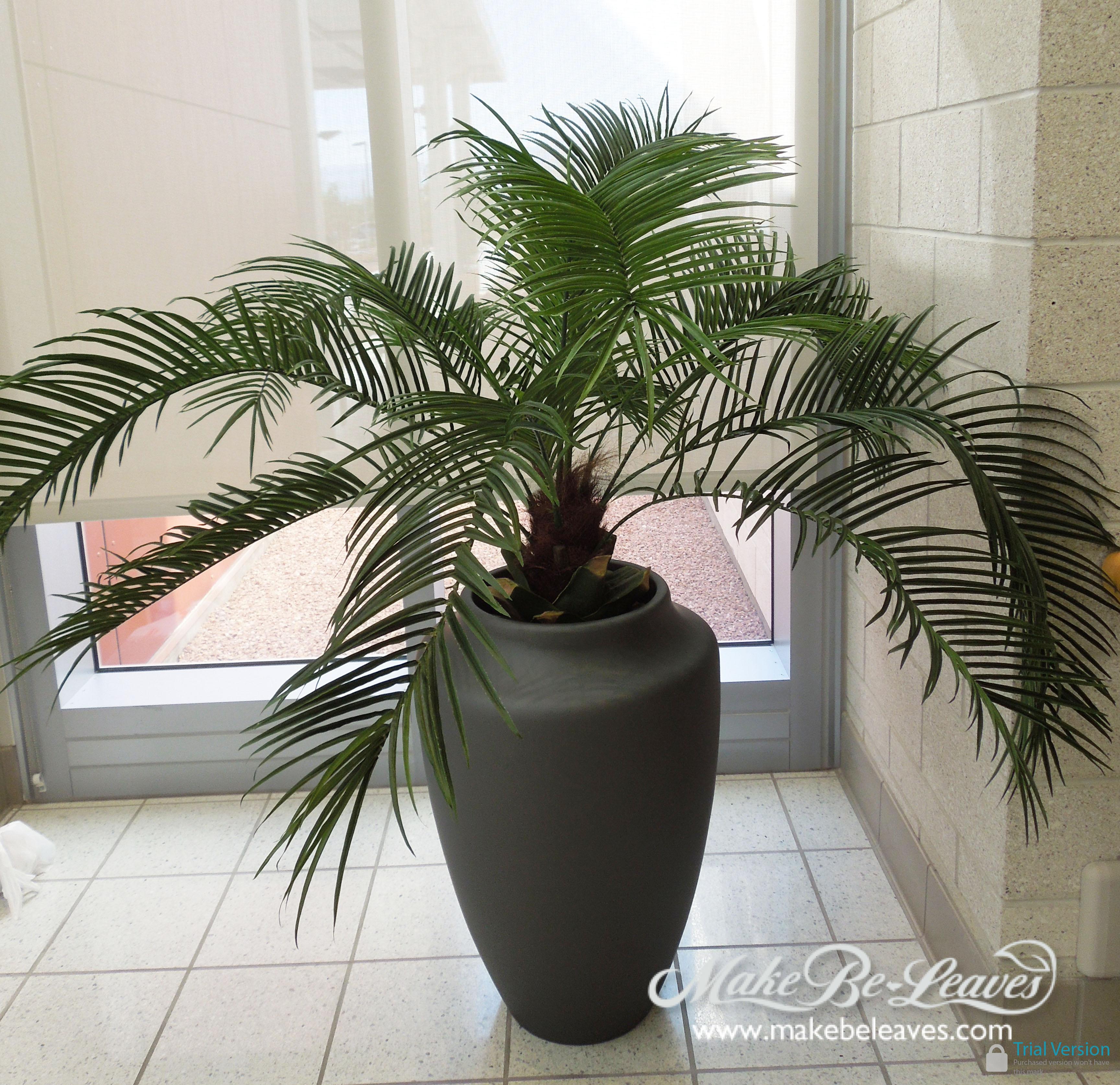 Pindo_Palm_in_Desert_Urn_fiberglass