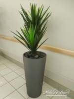 Double_Yucca_in_European_tall_cylinder