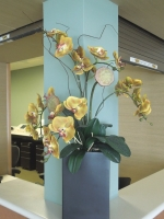 Phalaenopsis_Orchids_Arrangement
