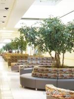 custom_Camellia_Leaf_Trees