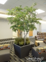 custom_Japanese_Maple_Trees