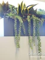 low_mixed_succulents