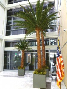 Preserved palms are the focal point of the the multi-story lobby of our North Las Vegas GSA project.