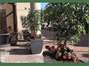 Artificial plants plantscaping silk flowers fake plants trees artificial plants as drought solution mightylinksfo