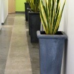 VA Medical Center Sanseveria Plants