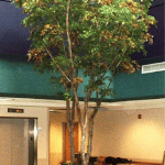 18-foot Maple Trees with Silk Leaves
