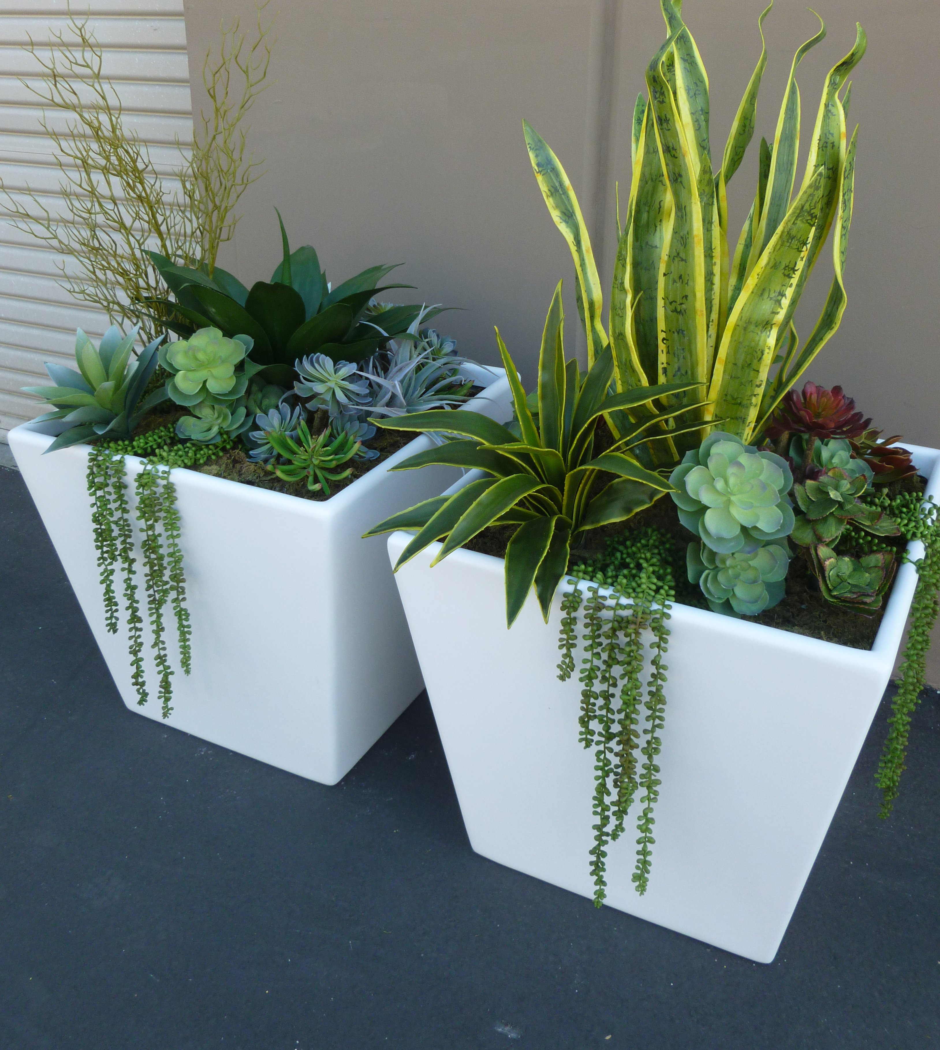 Mixed succulents in large fiberglass planters make be leaves Planters for succulents