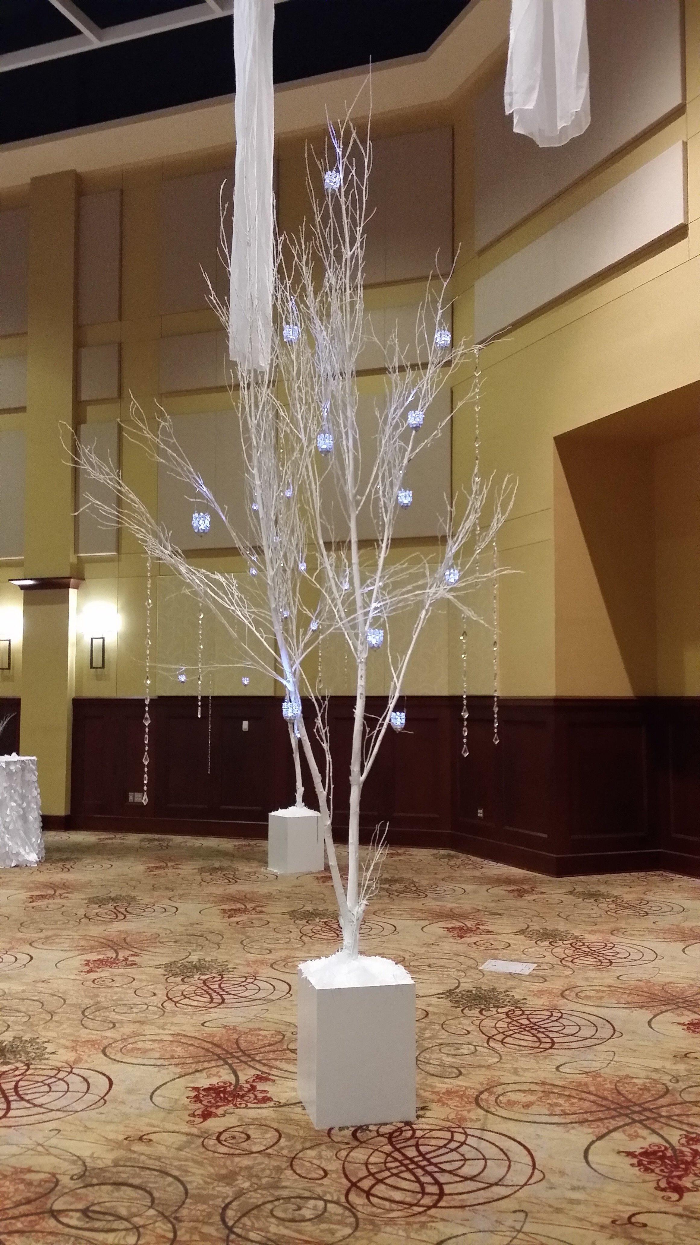 White Birch trunks