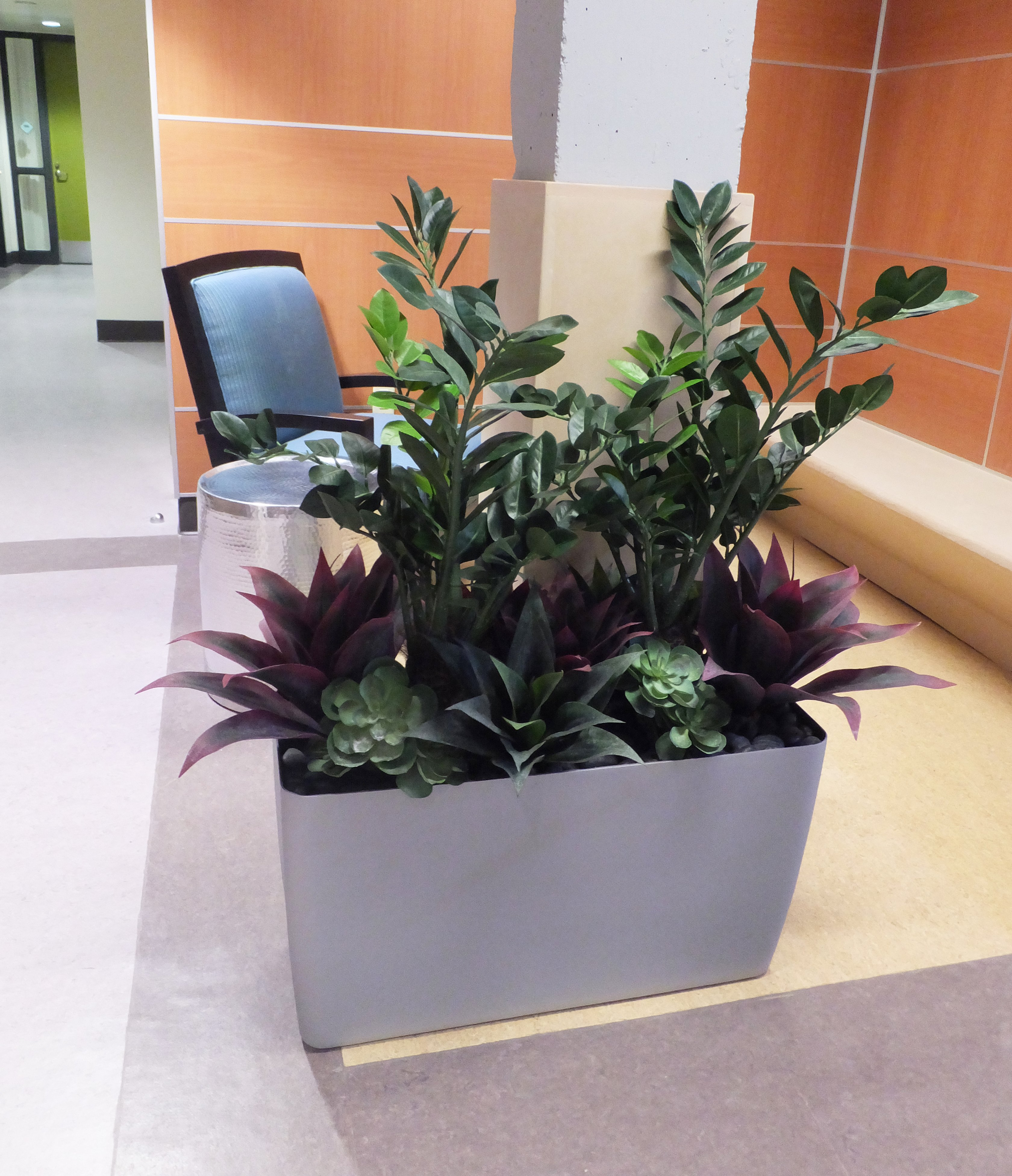 Inside of the VA Greater Los Angeles, Sepulveda Ambulatory Care Center, we mixed zamia, low agaves and escheverias to enhance the environment.