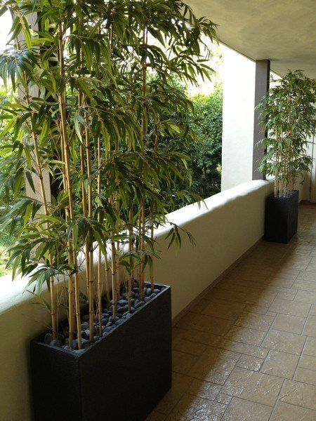 Make Be Leaves Plantscapes Helped To Conceal Two Unattractive Dark Columns Added Privacy And