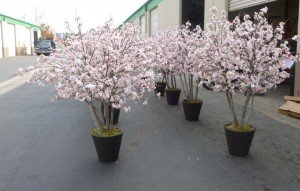 Union Bank's bespoke pink Cherry Blossom trees shown prior to shipping at the Make Be-Leaves warehouse.