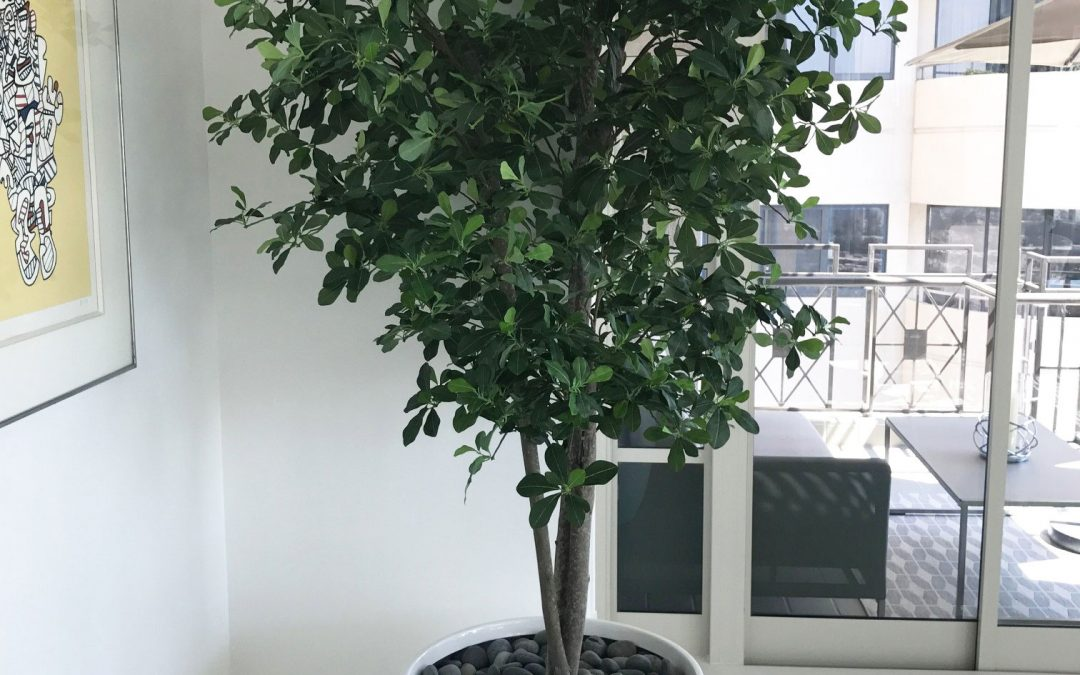 Best Artificial OLIVE Trees In Custom Containers - Make Be-Leaves SP87